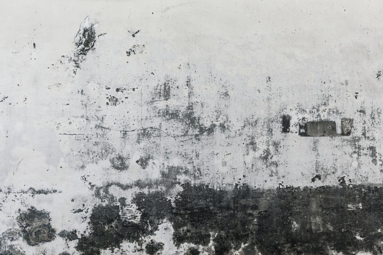 Landlord will not remove the mold in my Florida apartment | 954.323.2529