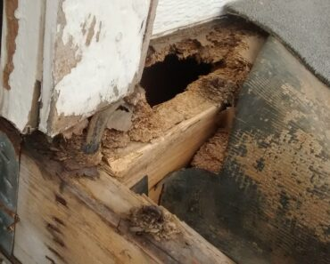 Can I evict a Tenant that is Damaging my Property